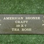 Tea-Rose-No-Vase-19-x-71